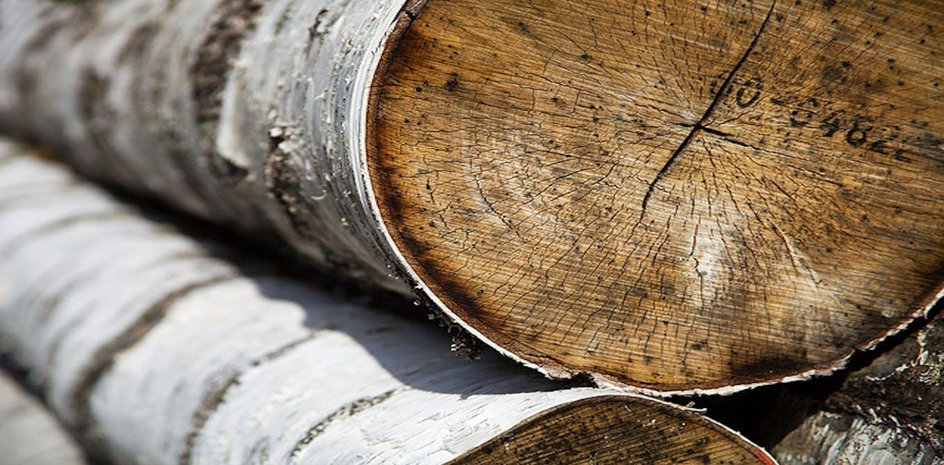 Illegal logging essay