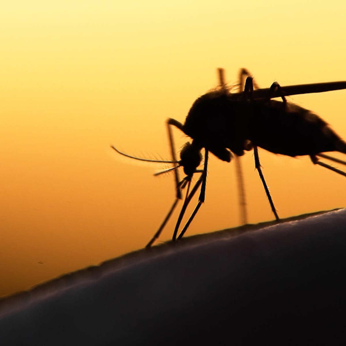 Debunking myths about malaria and its vector, the mosquito