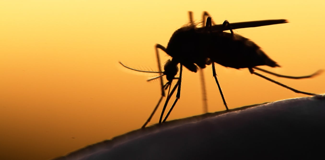 Debunking Myths About Malaria And Its Vector The Mosquito