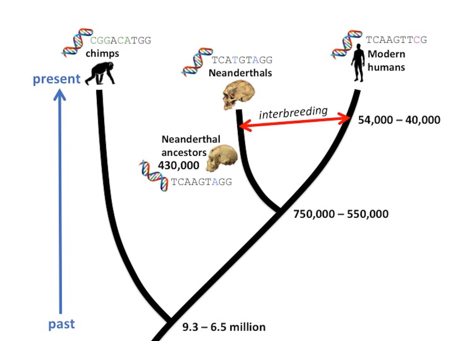 Molecular dating of phylogenies by likelihood methods of teaching