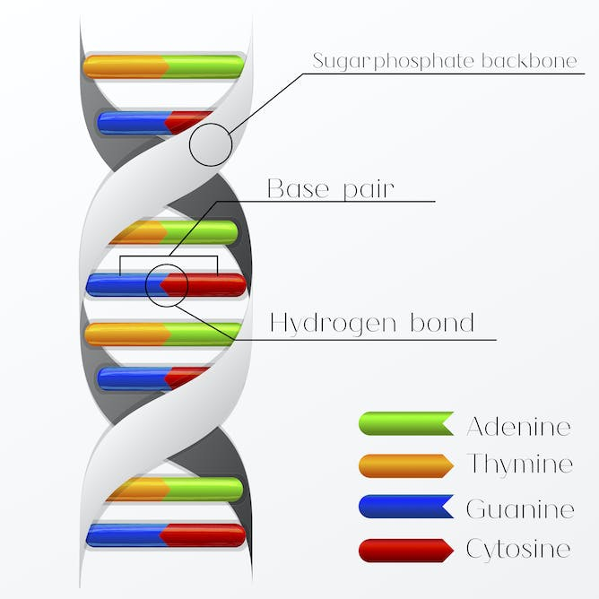 Dna dating