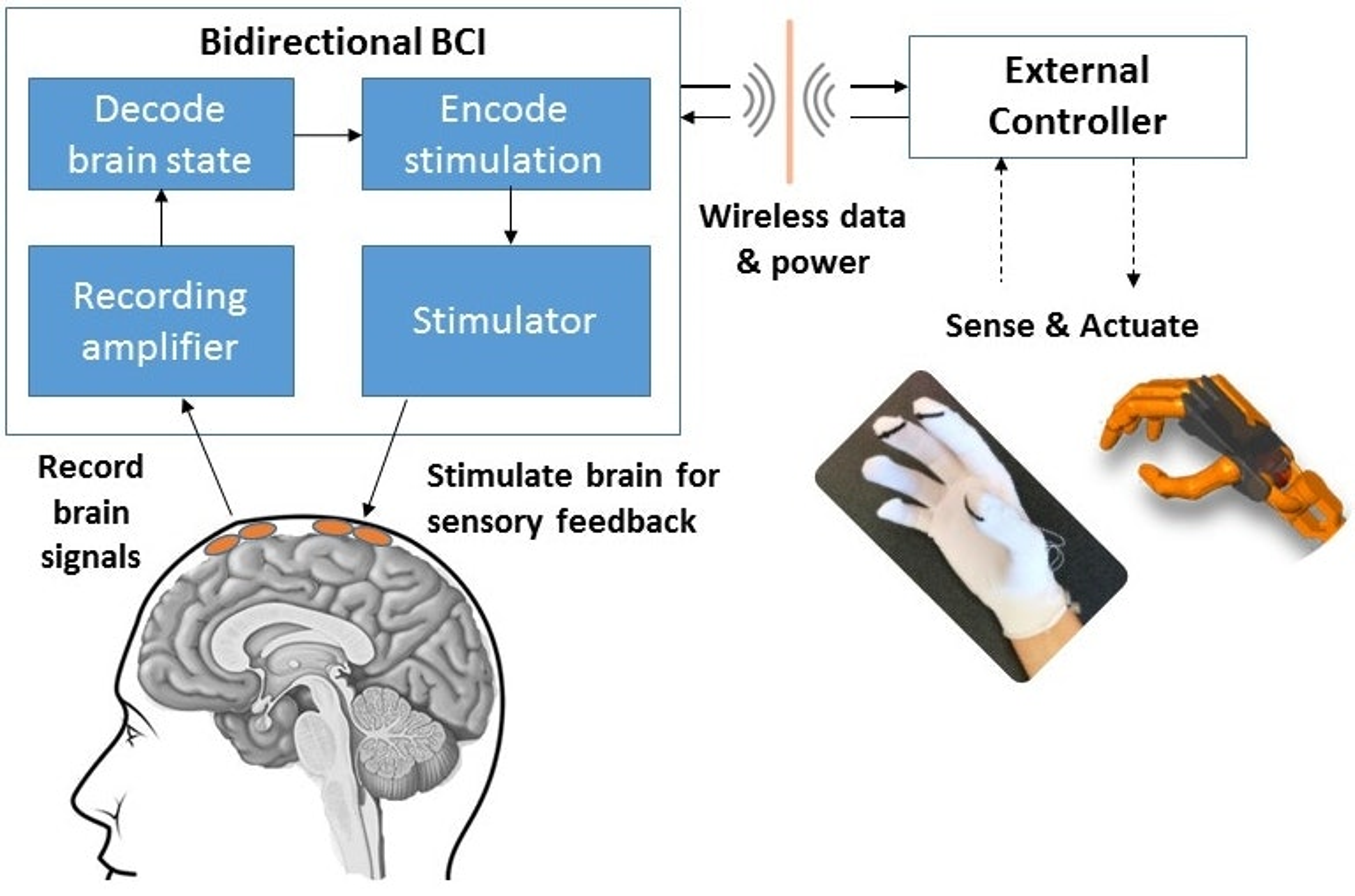 brain computer interface companies