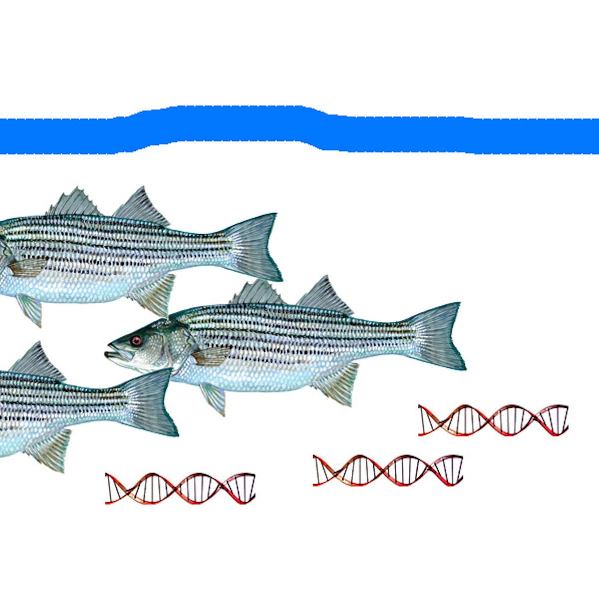 Fishing for DNA: Free-floating eDNA identifies presence and