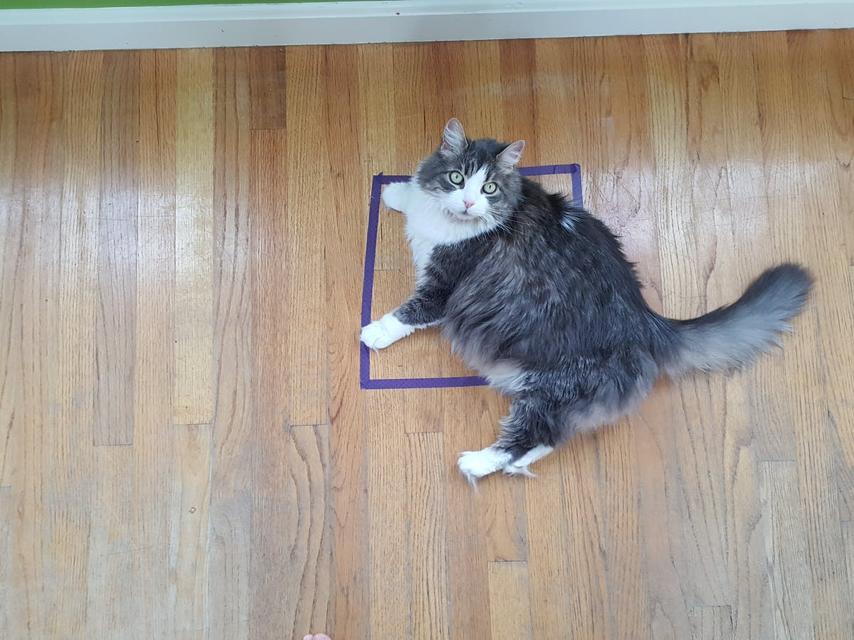 Cats Resist Thinking Inside The Box
