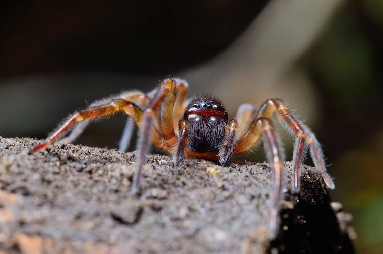 spider-arachnophobia