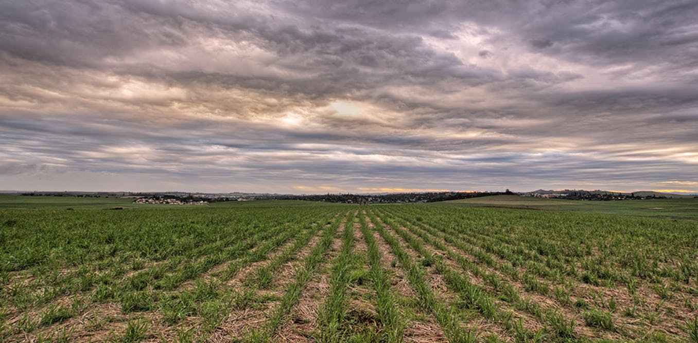 Crop probiotics: how more science and less hype can help Australian farmers