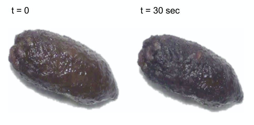 Physics of poo: Why it takes you and an elephant the same