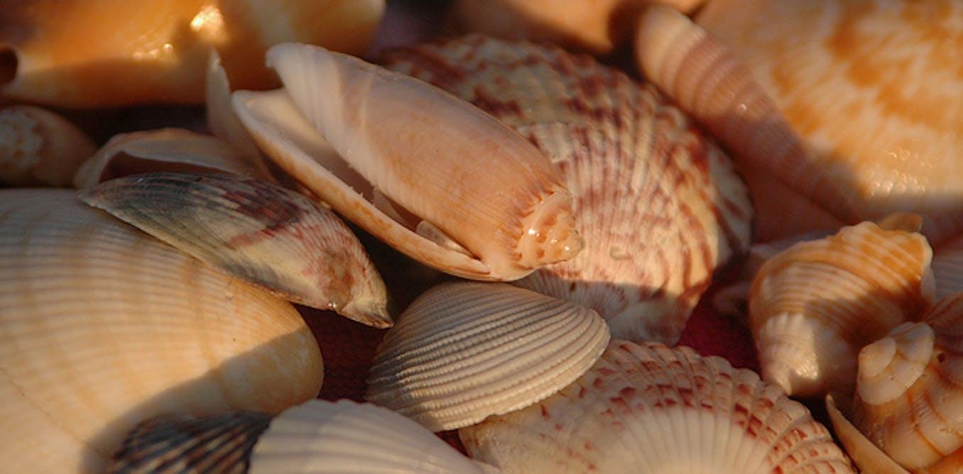 next time you see a seashell morgan emily