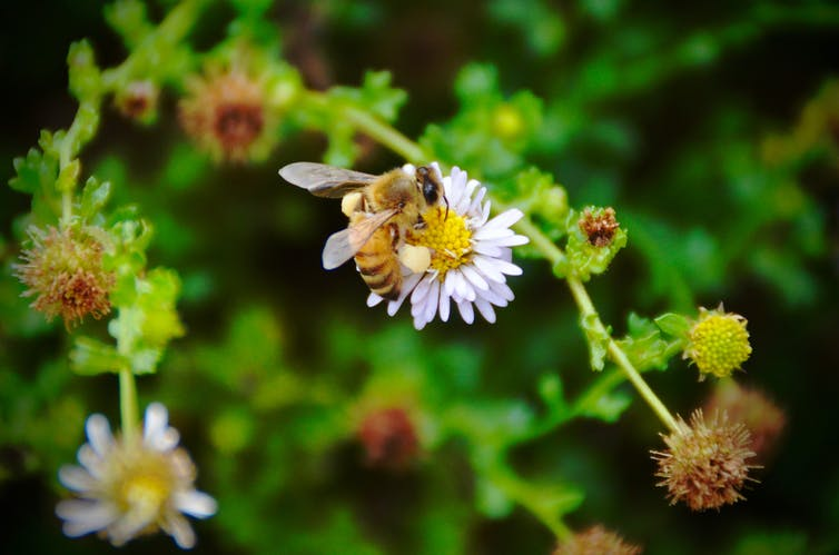 Ten years after the crisis, what is happening to the world's bees?