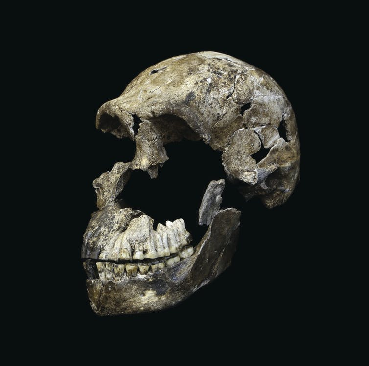 human skull John Hawks