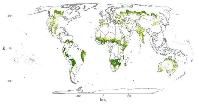 Earth's Forest Area 9 Percent Greater Than Thought