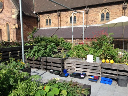 Biophilic urbanism: how rooftop gardening soothes souls