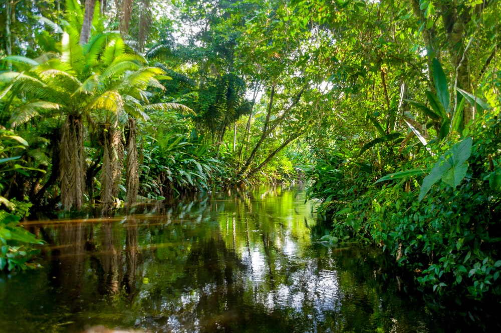 africas rainforests are different why it matters that