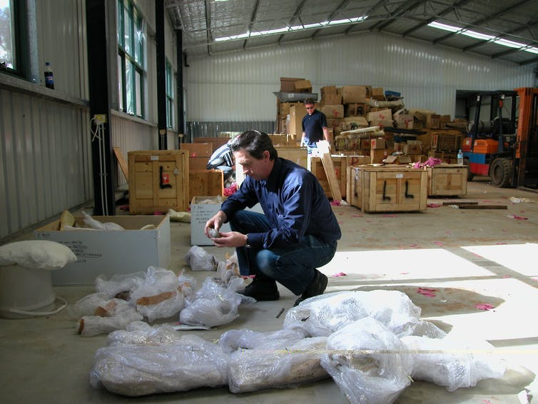 The author identifying fossils during an Australian Federal Police raid on a private property in Western Australia, June 2004. Approximately A$6 million worth of illegally imported fossils from China were seized and eventually repatriated. John Long, Flinders University