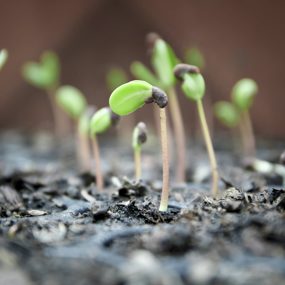 Curious Kids: how can a tiny seed actually grow into a huge tree?