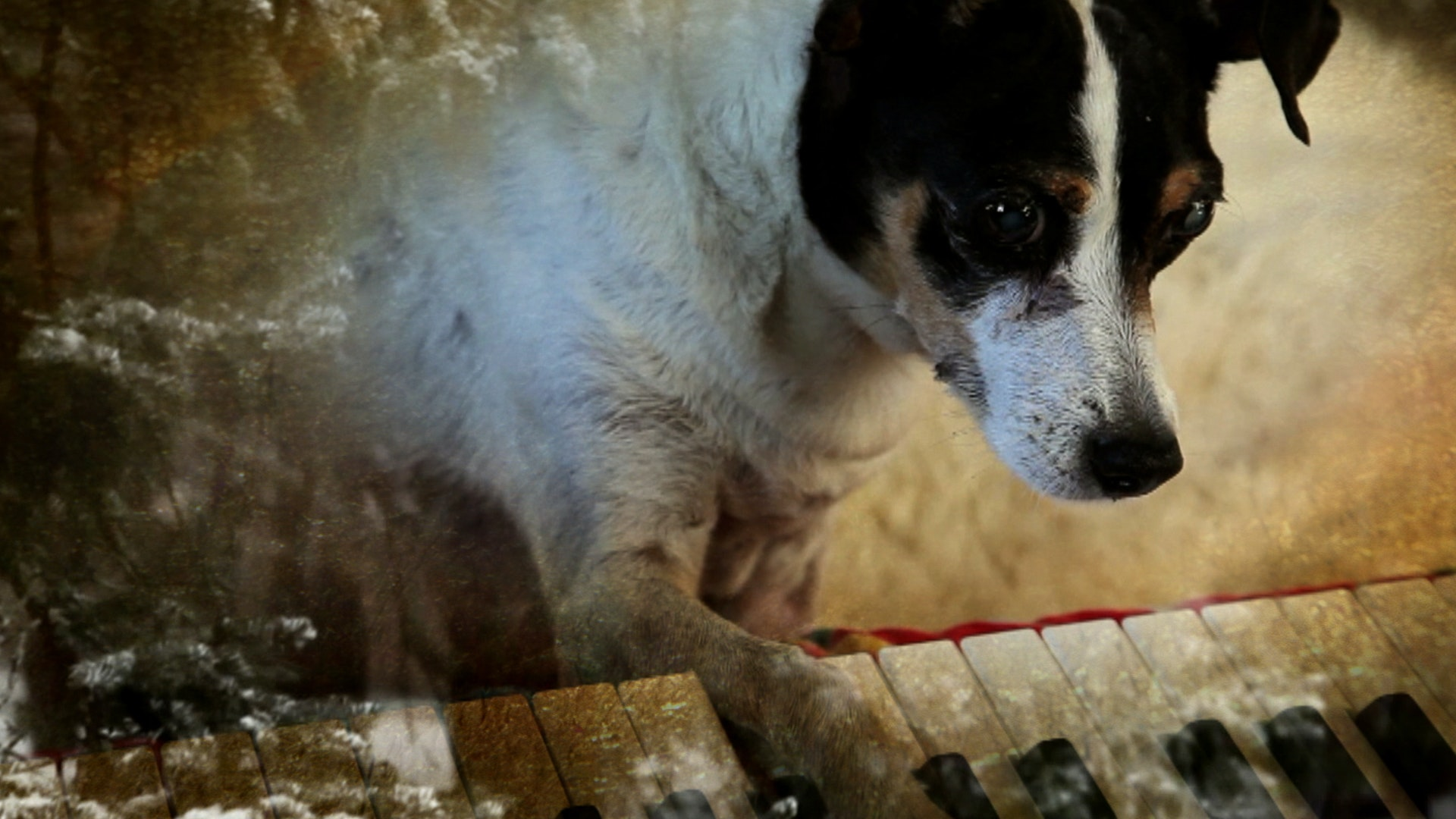 A Dog Called Jesus And Other Southern Stories