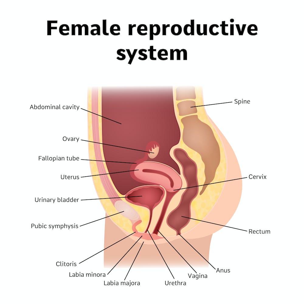 pee hole sex tube