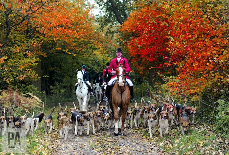 fox hunting is barbaric