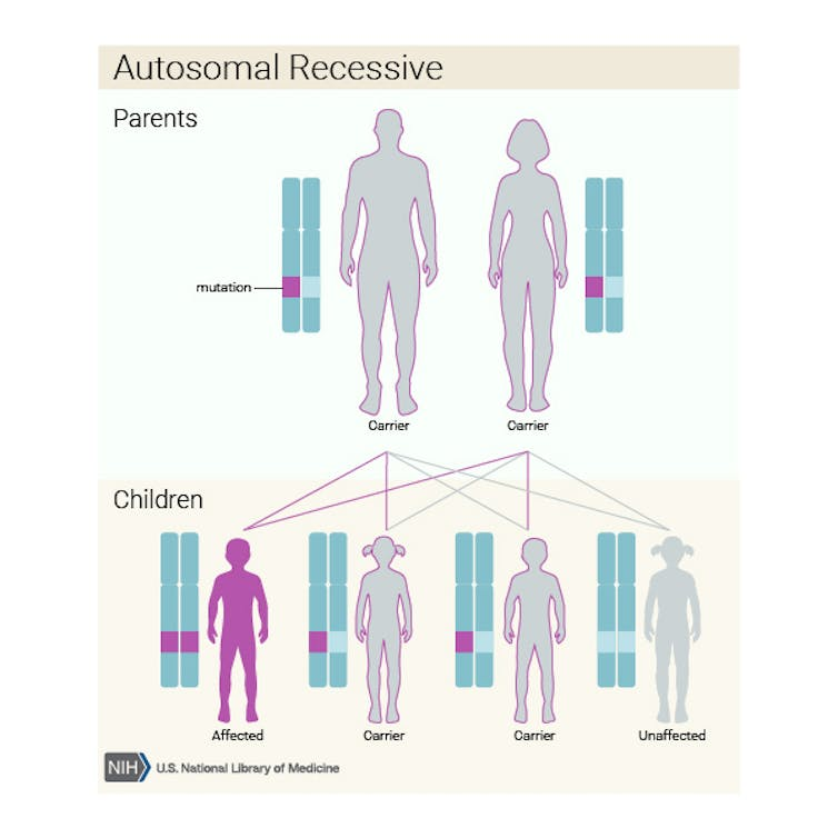 db463e6ccd0 Autosomal recessive inheritance of harmful mutations. from National Library  of Medicine