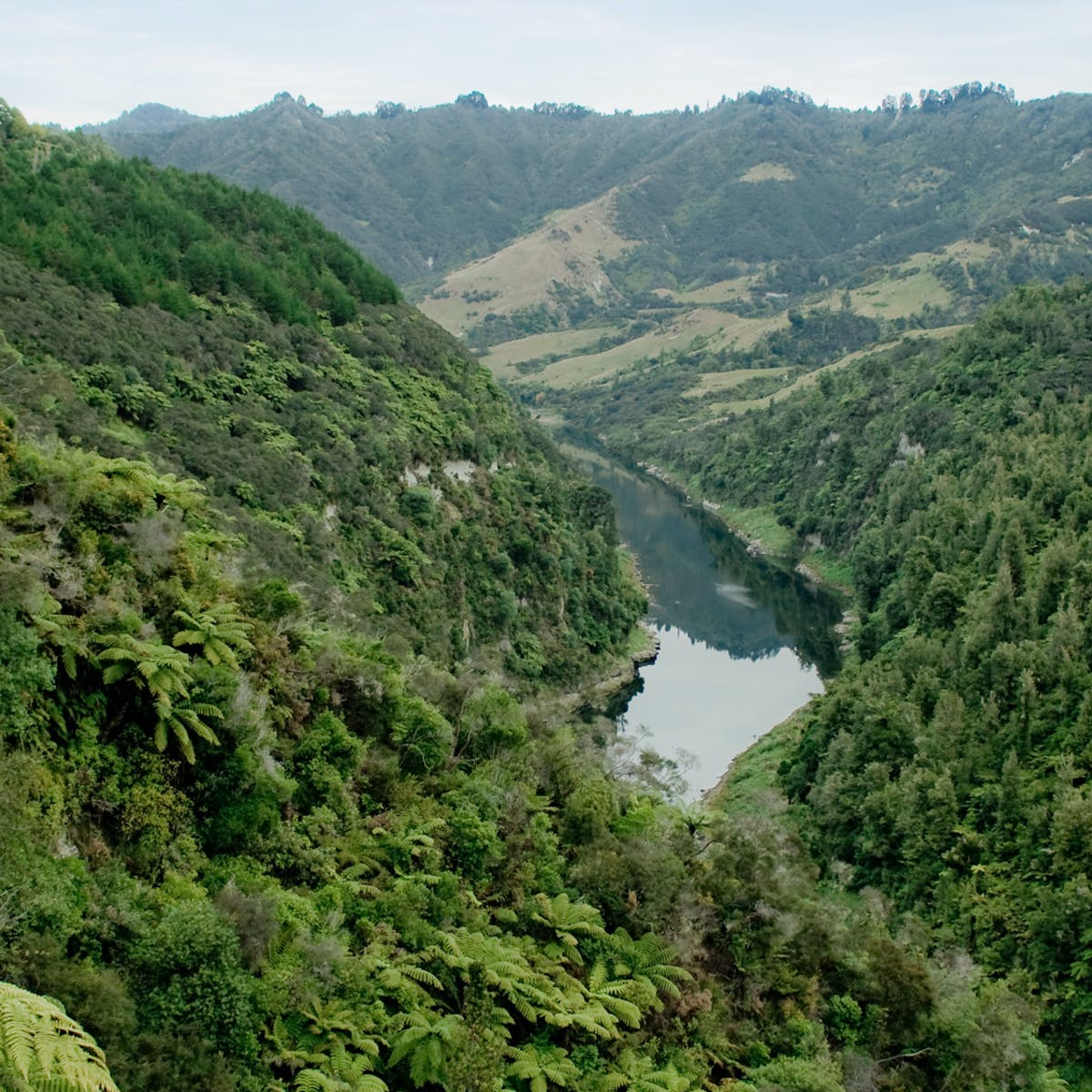 When A River Is A Person From Ecuador To New Zealand Nature Gets