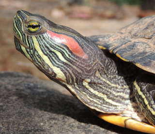 Here S What You Need To Know About Exotic Pets In Australia