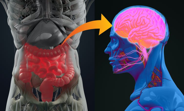 The brain and the gut talk to each other: how fixing one