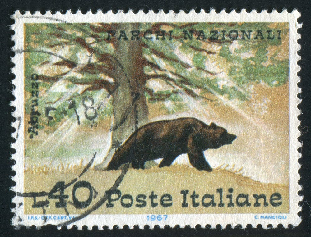 Italy has its own subspecies of bear – but there are only 50