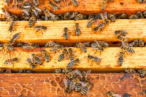 Common pesticides can harm bees, but the jury is still out