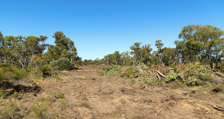 Image of cleared bushland