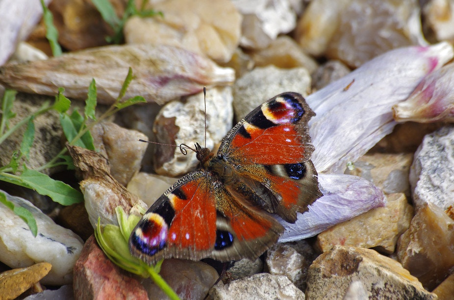 Conversation between a biologist and a philosopher: identity, metamorphosis and the self (2)