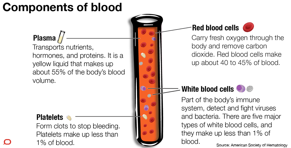 Explainer what s actually in our blood