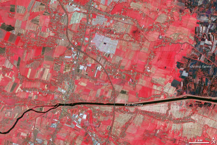 Nasa picture (red represents vegetation in field) of Sidorajo town in 2004, before Lusi's eruption.