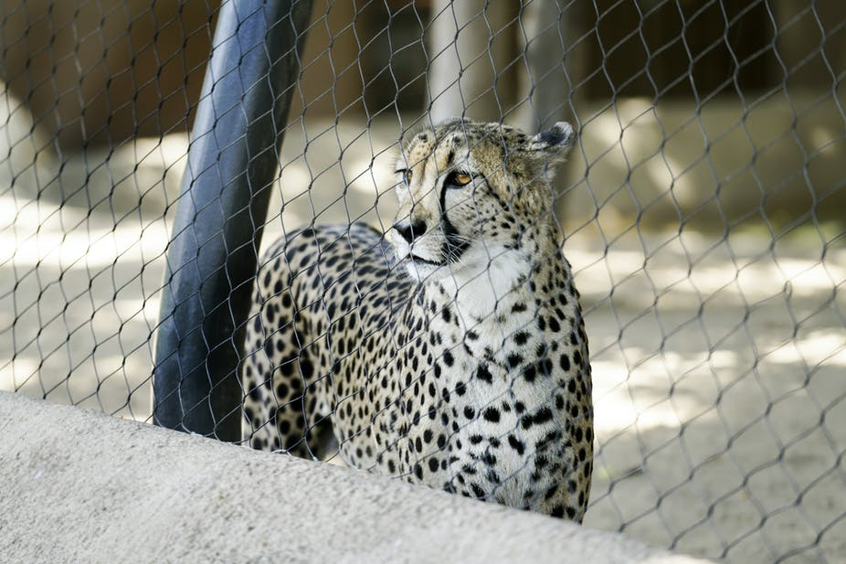 articles on why animals should not be kept in zoos
