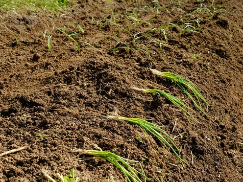 Image result for The Role Of Soil Microorganisms In Plant Mineral Nutrition