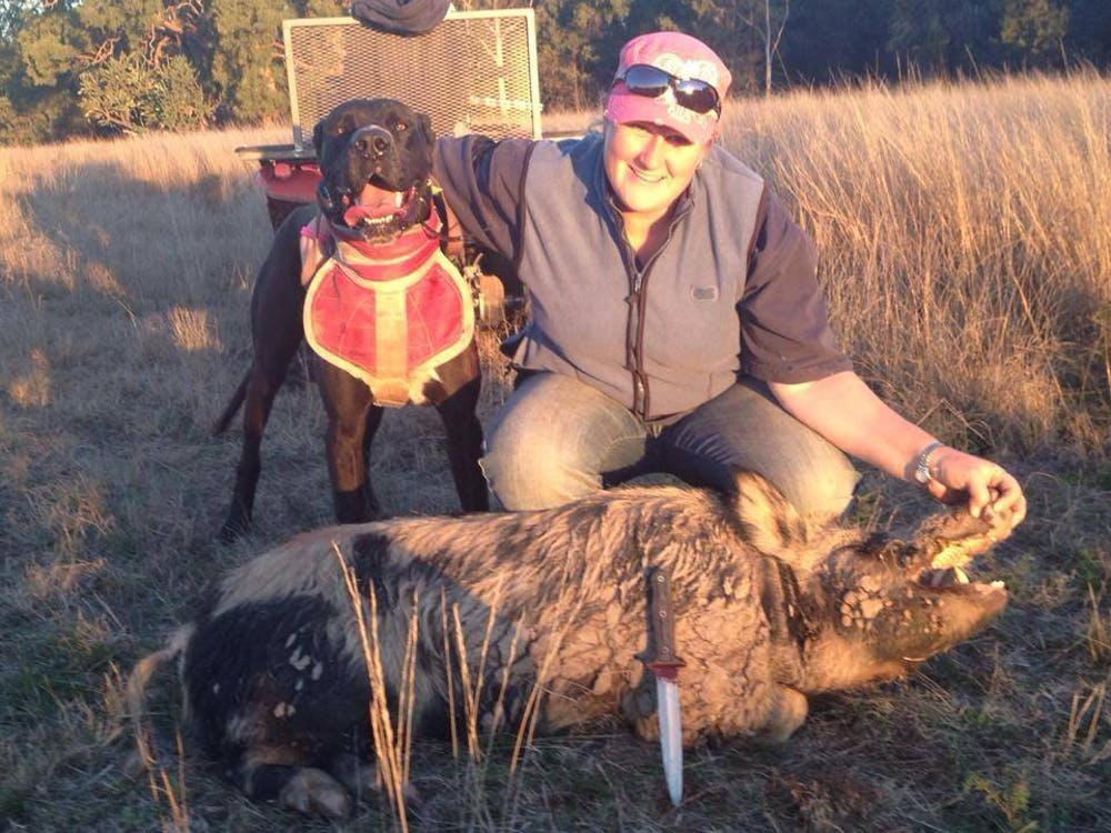 Pig-hunting dogs and humans are at risk of a disease that