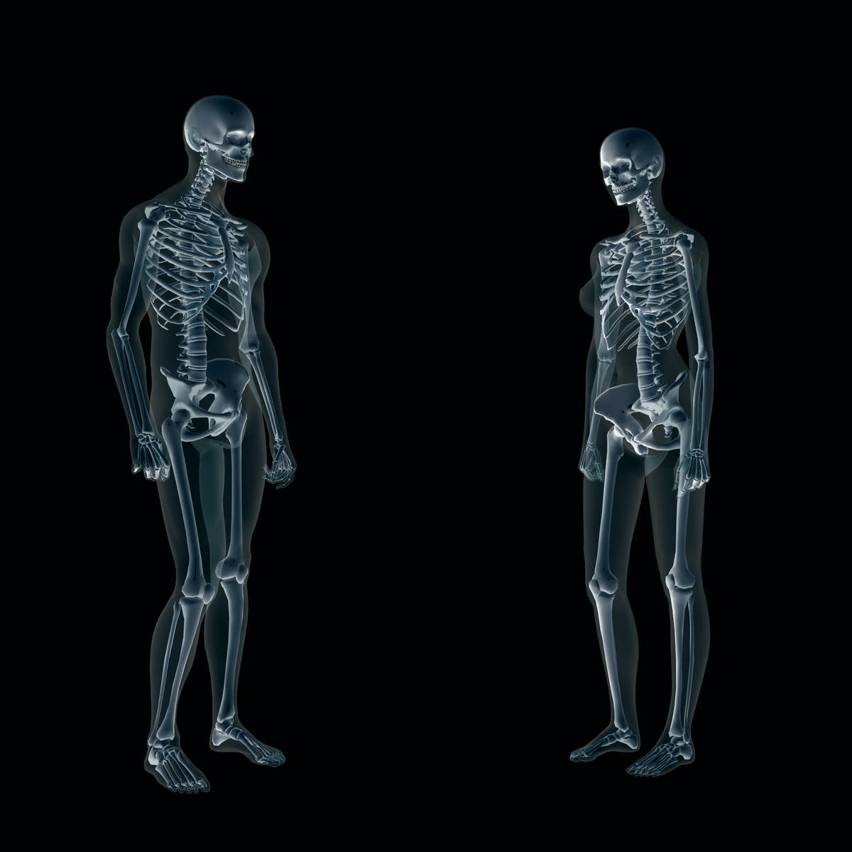 Both men and women need strong bones, but their skeletons