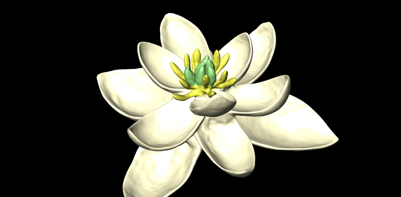 Revealed the first ever flower 140m years ago looked like a magnolia izmirmasajfo