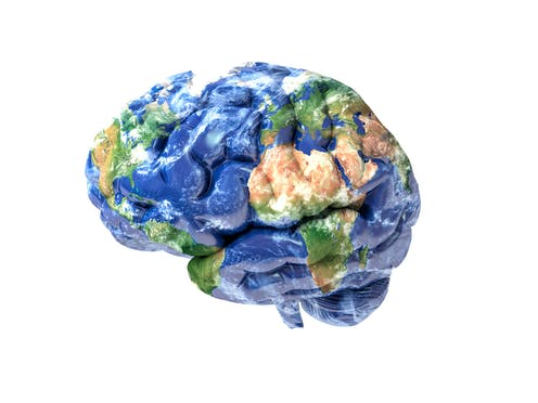Map Of Developing Human Brain Shows >> Three Reasons To Think Twice About Mapping The Brain
