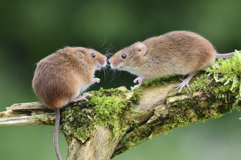 Gene drives' could wipe out whole populations of pests in one fell swoop