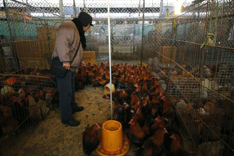 How safe is chicken imported from China? 5 questions answered