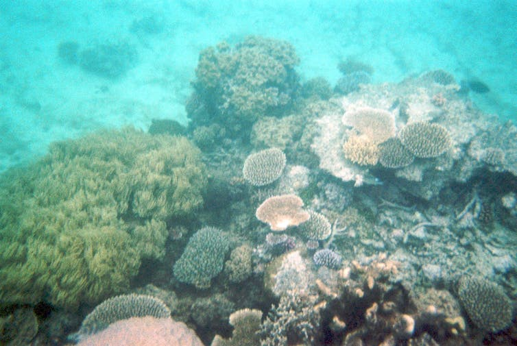 Image of the reef under the water