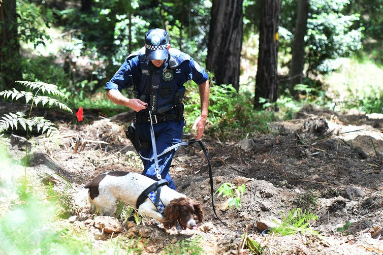 For sniffing out crime and missing persons, science backs blood-detection dogs  File-20170816-17703-1datck7