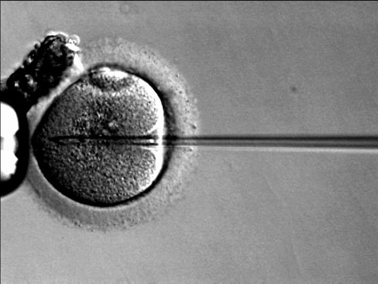 There could be a cure for genetic male fertility on the horizon