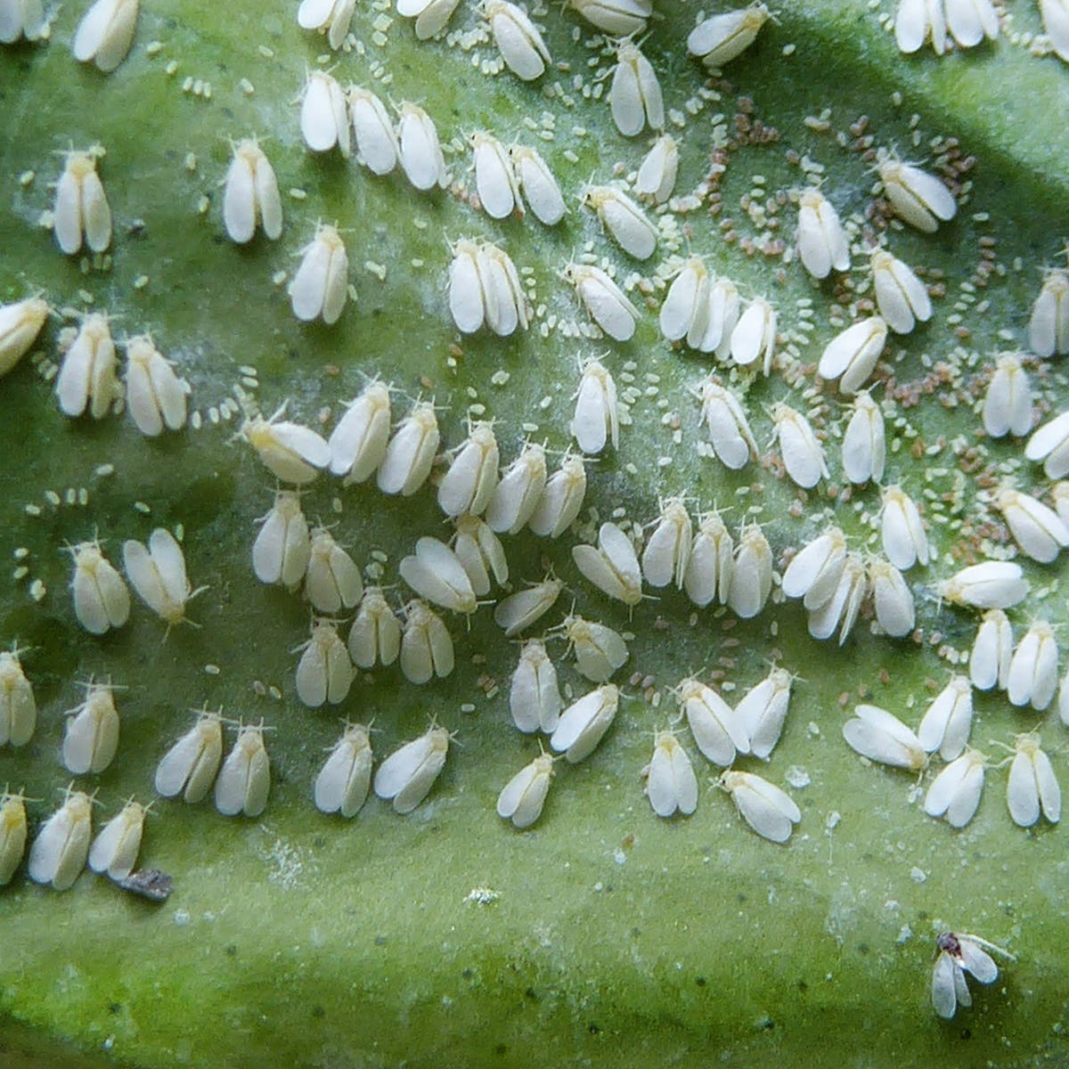 Africa S Most Notorious Insects The Bugs That Hit Agriculture The Hardest
