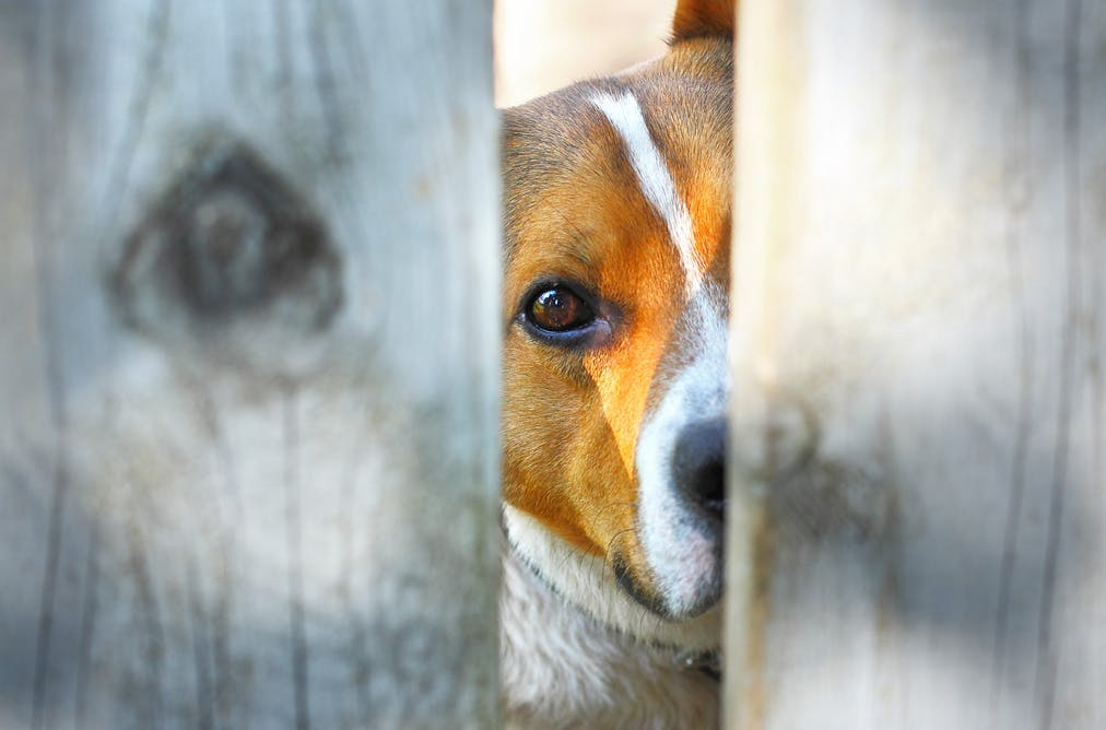 should animals have a bill of rights