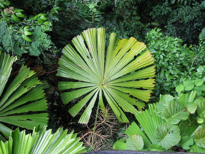 Denuding Mystery Of Leaf Size, Here's What Behind Huge Leaves & Tiny Ones