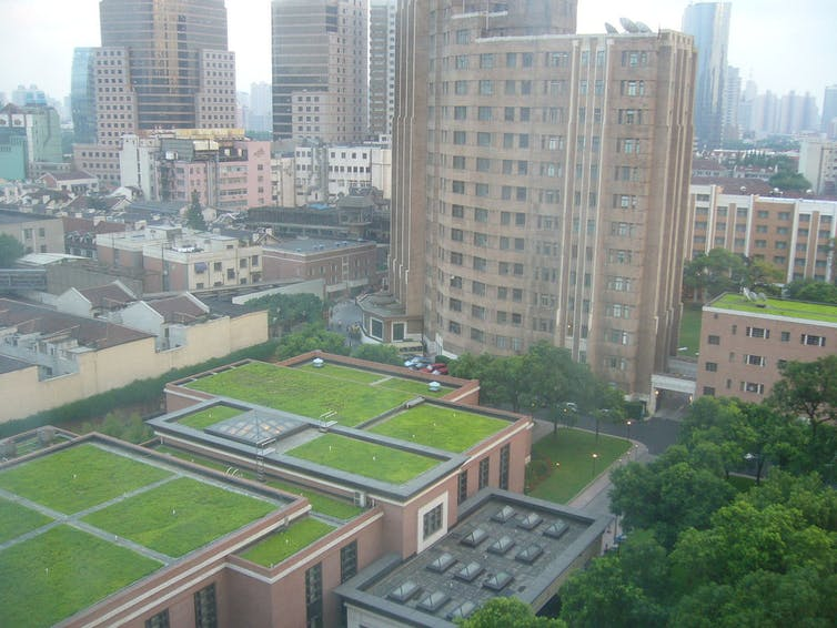 urban grassy rooftops, China