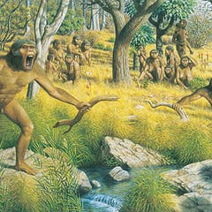 Australopithecus Food They Ate