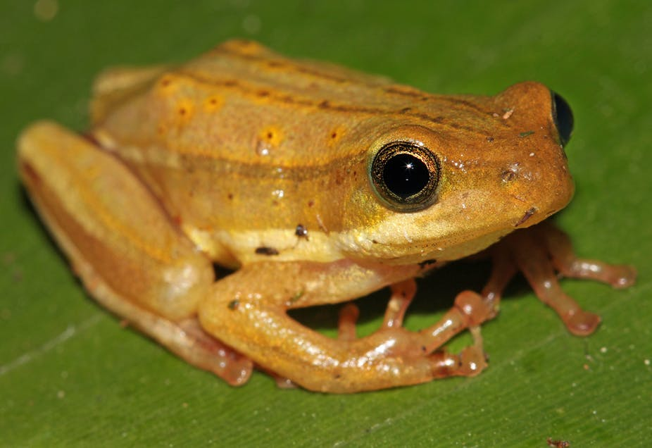 using new techniques to track kenya s disappearing amphibians