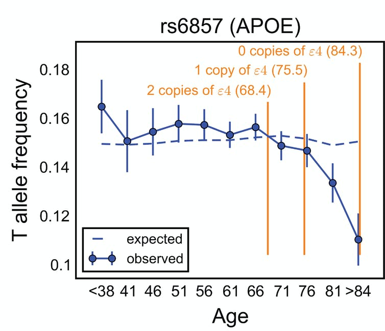 People who carry a variant of the APOE gene die at a higher rate and are less common among the old age categories. Mostafavi et al, PLOS Biology, CC BY